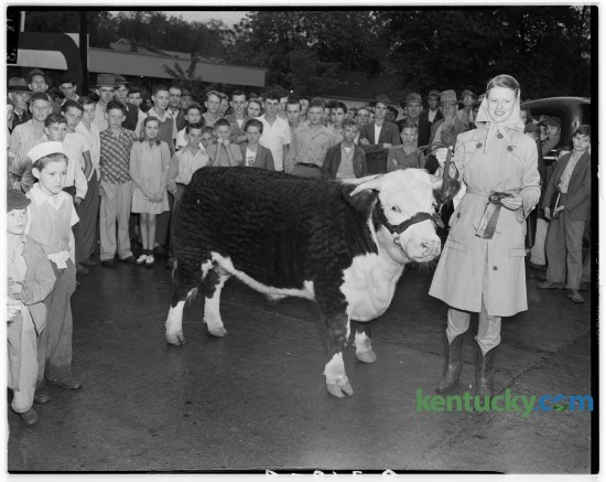 Miss Claire Ann Graves, Georgetown, pictured with her Hereford steer which won the grand championship of the Scott County 4-H Club and F. F. A. Show held Oct. 11, 1946 at Georgetown. Published in the Lexington Herald October 12, 1946.