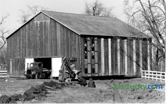 Bob Lail bought this 15-bent tobacco barn from the former Belair Farm and is having it moved, a third at a time, to his Delong Farm in the Richmond Road area. The front third of the barn was being moved into place on March 1, 1983 as workmen prepared a foundation. Photo by Ron Garrison | Staff