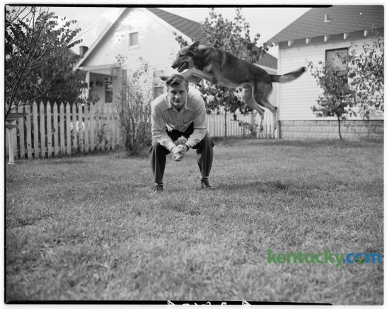 U.S. Army Sgt. James Hellard, who returned from Germany August 31, 1946 posed for an action photo with his adopted Nazi-trained war dog, Tiger, at his home in Lexington. Tiger, a 90 pound police dog was captured in May 1945 near Camp Dachau by a soldier in Sgt. Hellard's company. Taken from an SS captain, he was brought back to the camp to be a mascot. When first brought to camp he exhibited a hatred for G.I.'s by biting them, thus earning the name Tiger. After some detraining by Sgt. Hellard he gradually lost his intense dislike for Americans. Published in the Lexington Herald October 2, 1946. Herald-Leader Archive Photo