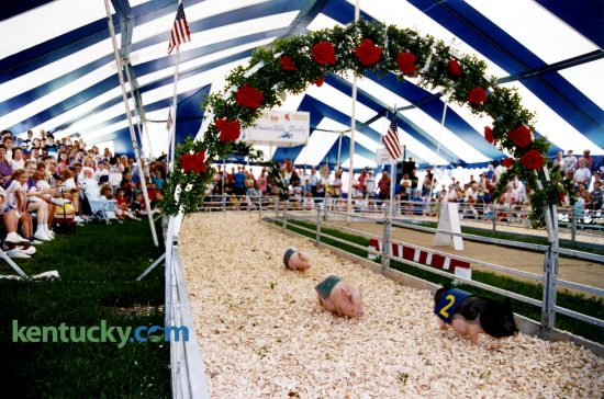 Asian pot bellied pigs race during opening day of the Kentucky State Fair, Aug. 20, 1992 in Louisville. Fans were assigned a pig and if their pig won, they were awarded prizes. The races were sponsored by the Kentucky Pork Producers Association. Photo by David Perry | staff